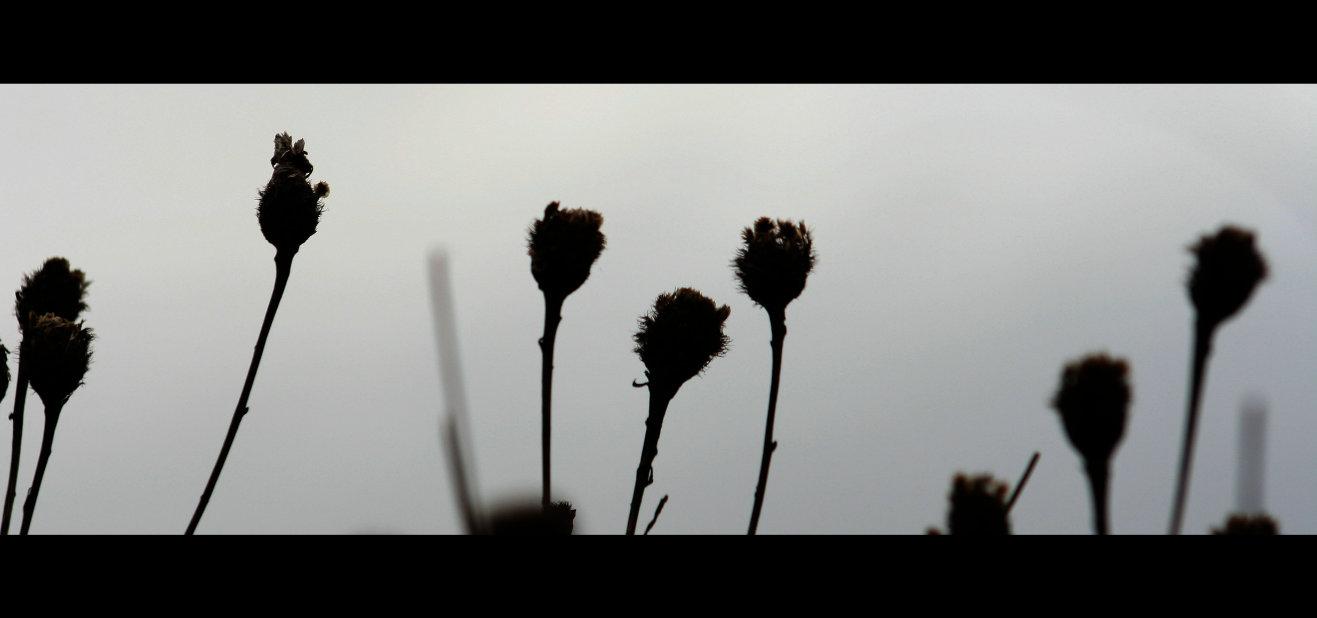 flowers-sustainability-temp.jpg
